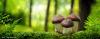 Pilzexkursion für Einsteiger und Fortgeschrittene